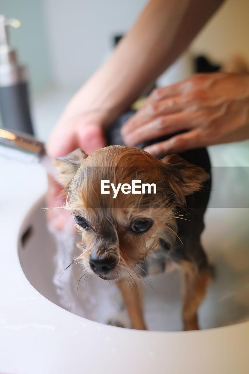 Close-Up Of Hands Washing Dog