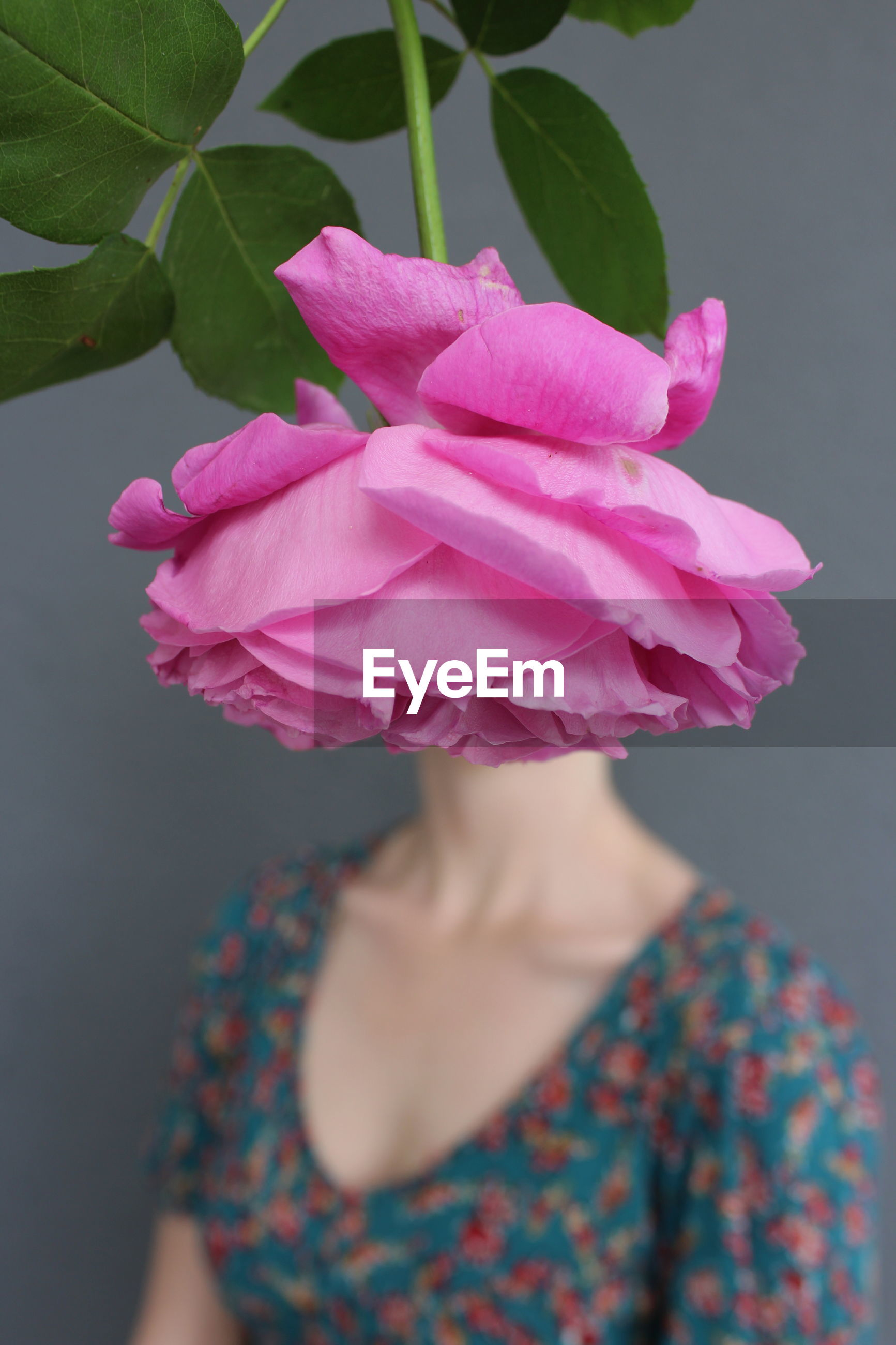 Close-up of pink rose over woman face in background