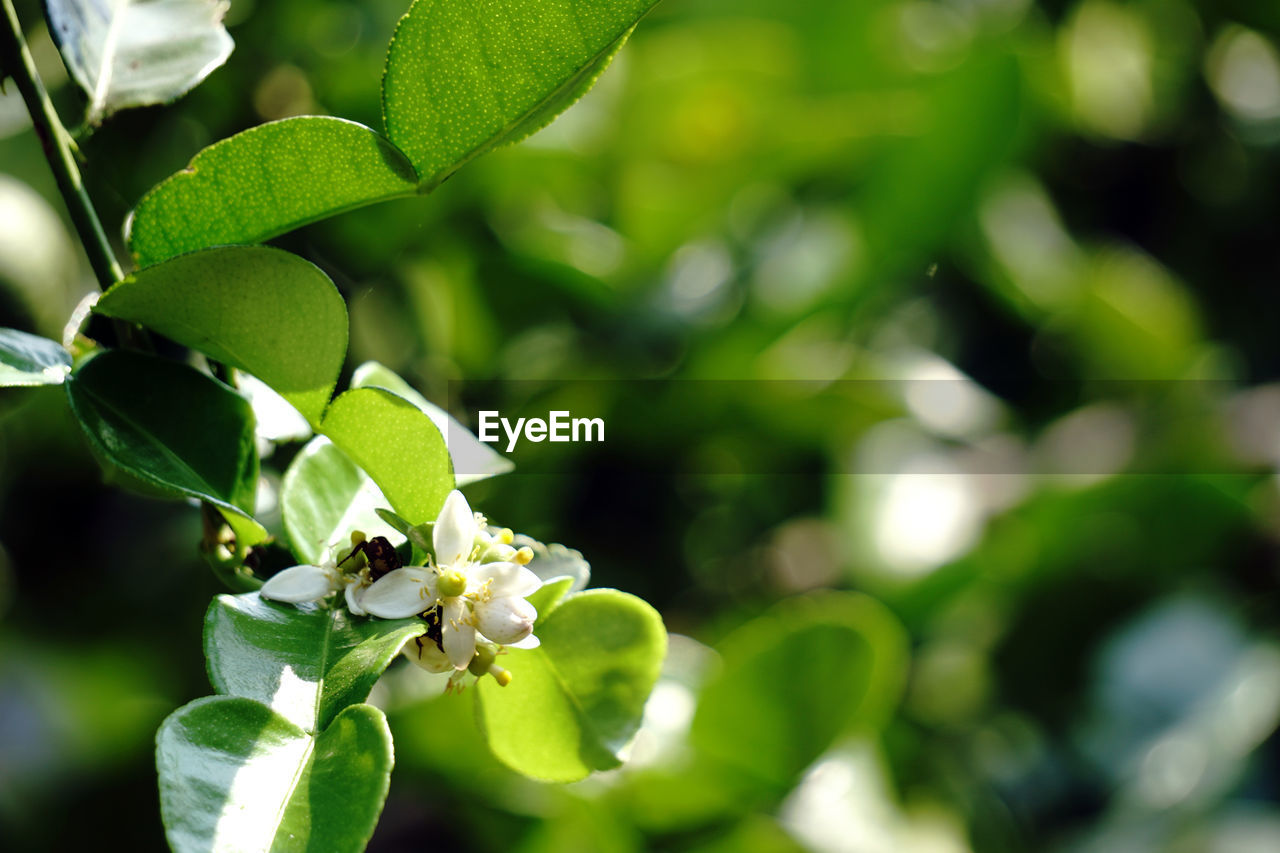 growth, plant, leaf, plant part, green color, close-up, focus on foreground, beauty in nature, freshness, no people, nature, day, invertebrate, animals in the wild, animal wildlife, animal themes, insect, one animal, animal, selective focus, outdoors, flower head