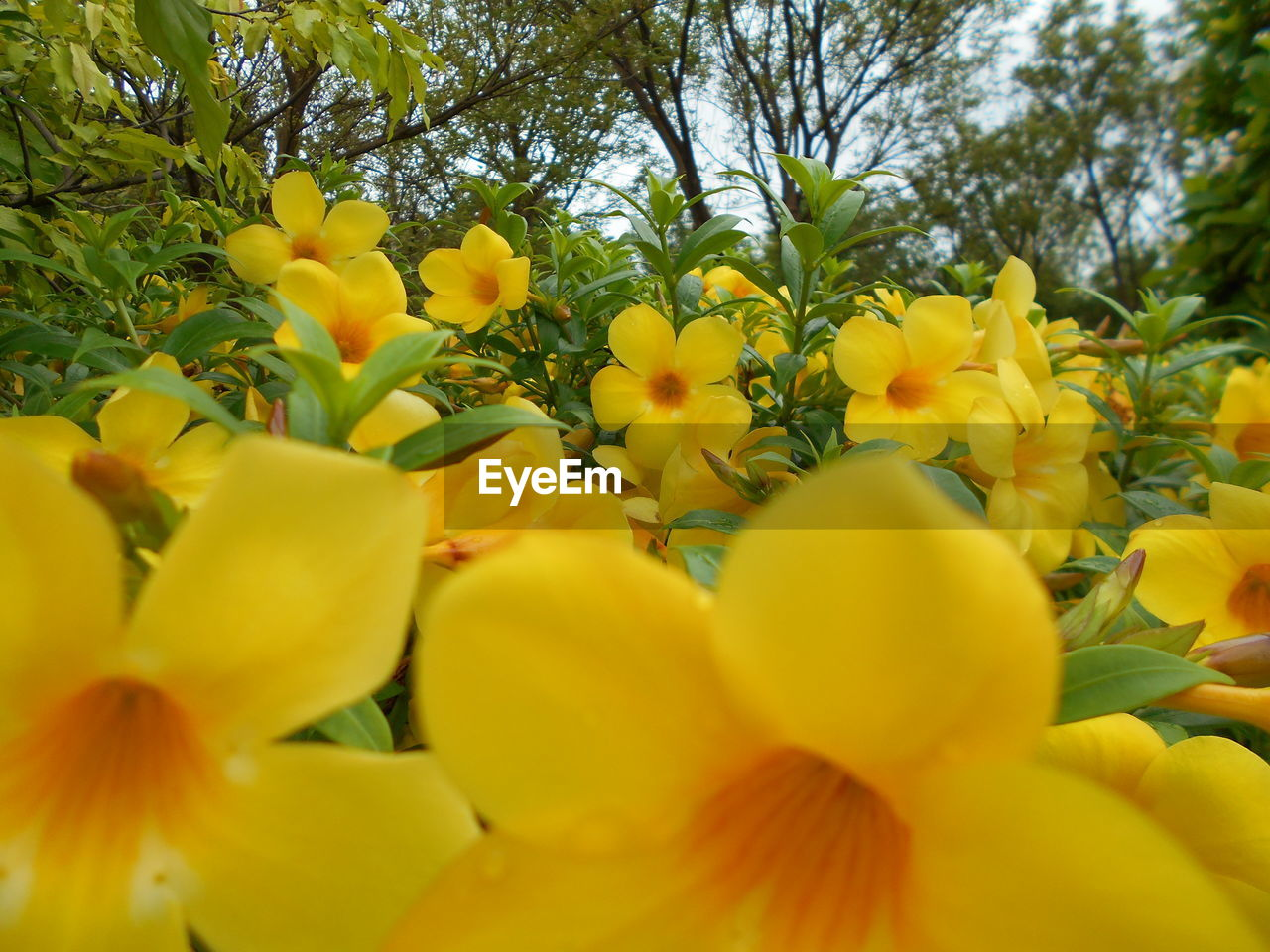 yellow, flower, growth, freshness, nature, beauty in nature, selective focus, fragility, petal, plant, vibrant color, blossom, outdoors, day, close-up, no people, springtime, park - man made space, flower head, tree, blooming
