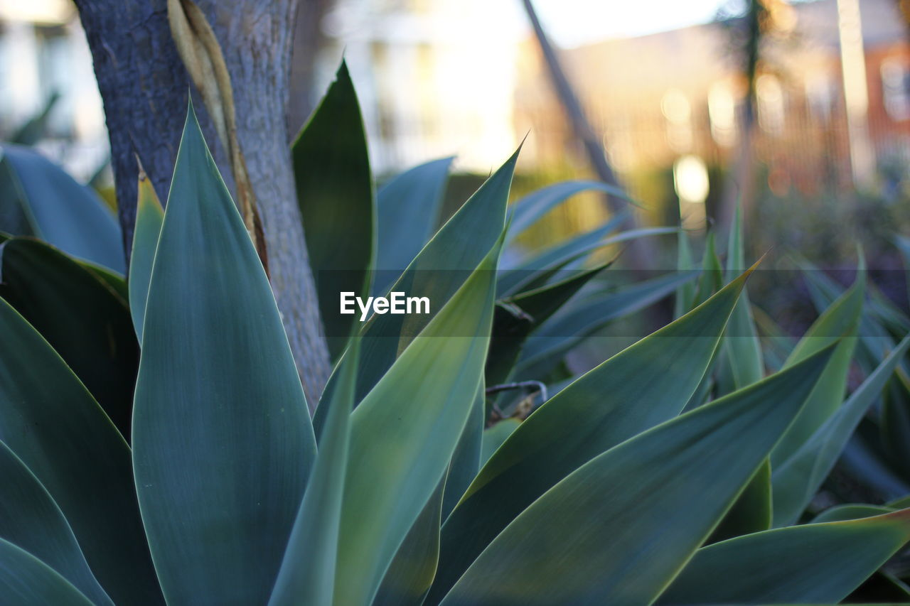growth, plant, leaf, nature, no people, green color, outdoors, day, beauty in nature, close-up, grass, freshness
