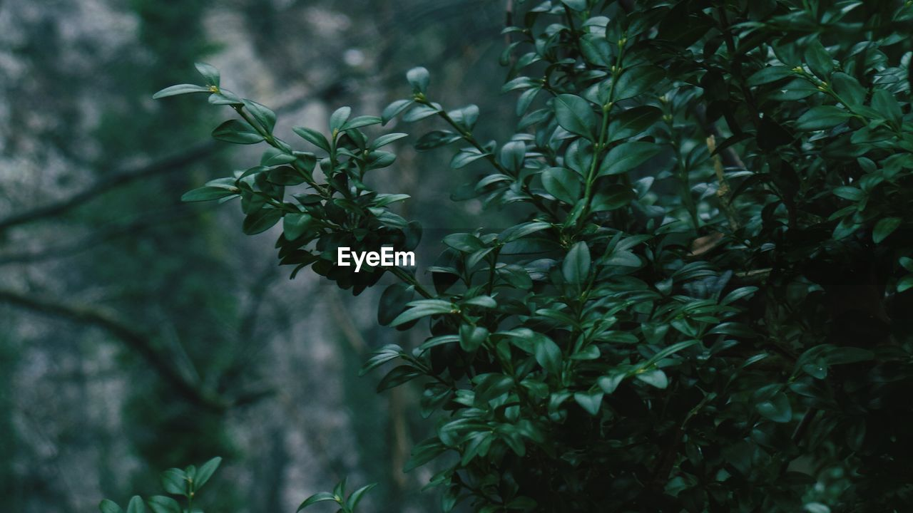 nature, plant, growth, leaf, beauty in nature, no people, outdoors, day, tree