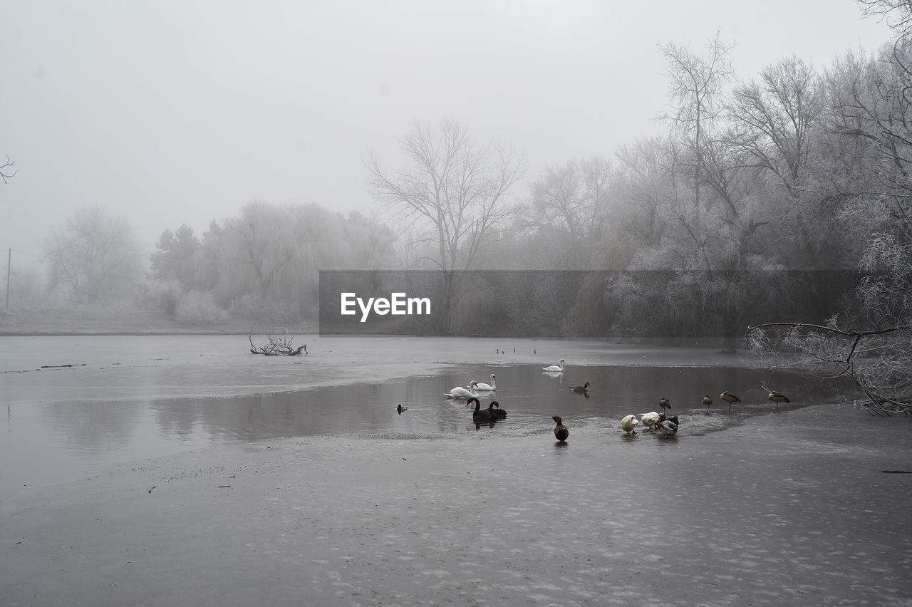 VIEW OF BIRDS ON LAKE