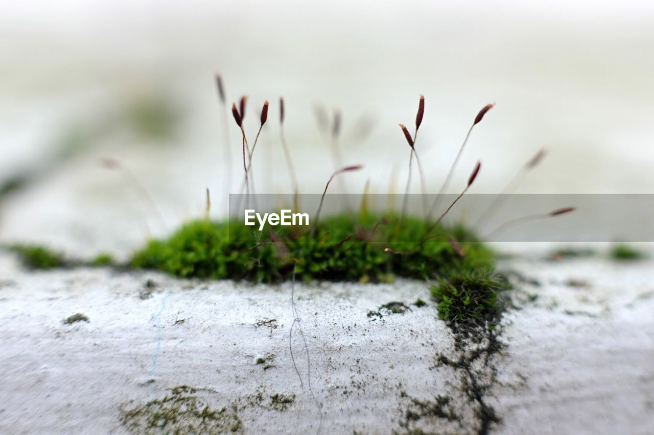plant, growth, selective focus, nature, close-up, no people, beauty in nature, day, focus on foreground, green color, land, outdoors, vulnerability, tranquility, field, fragility, grass, moss, freshness, surface level