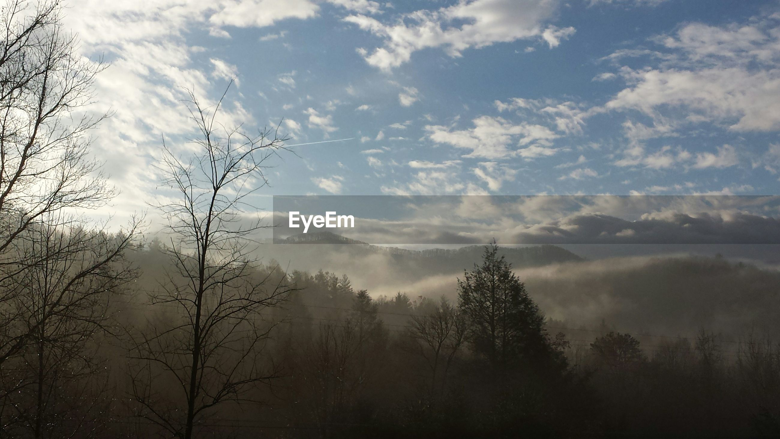 Trees against mountains in foggy weather