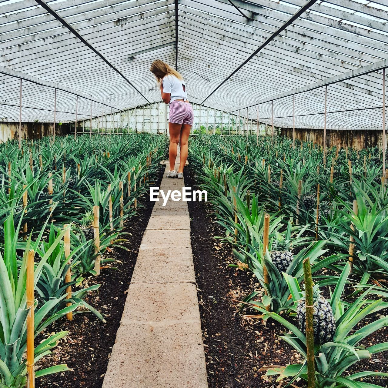 Rear View Of Woman Standing In Greenhouse