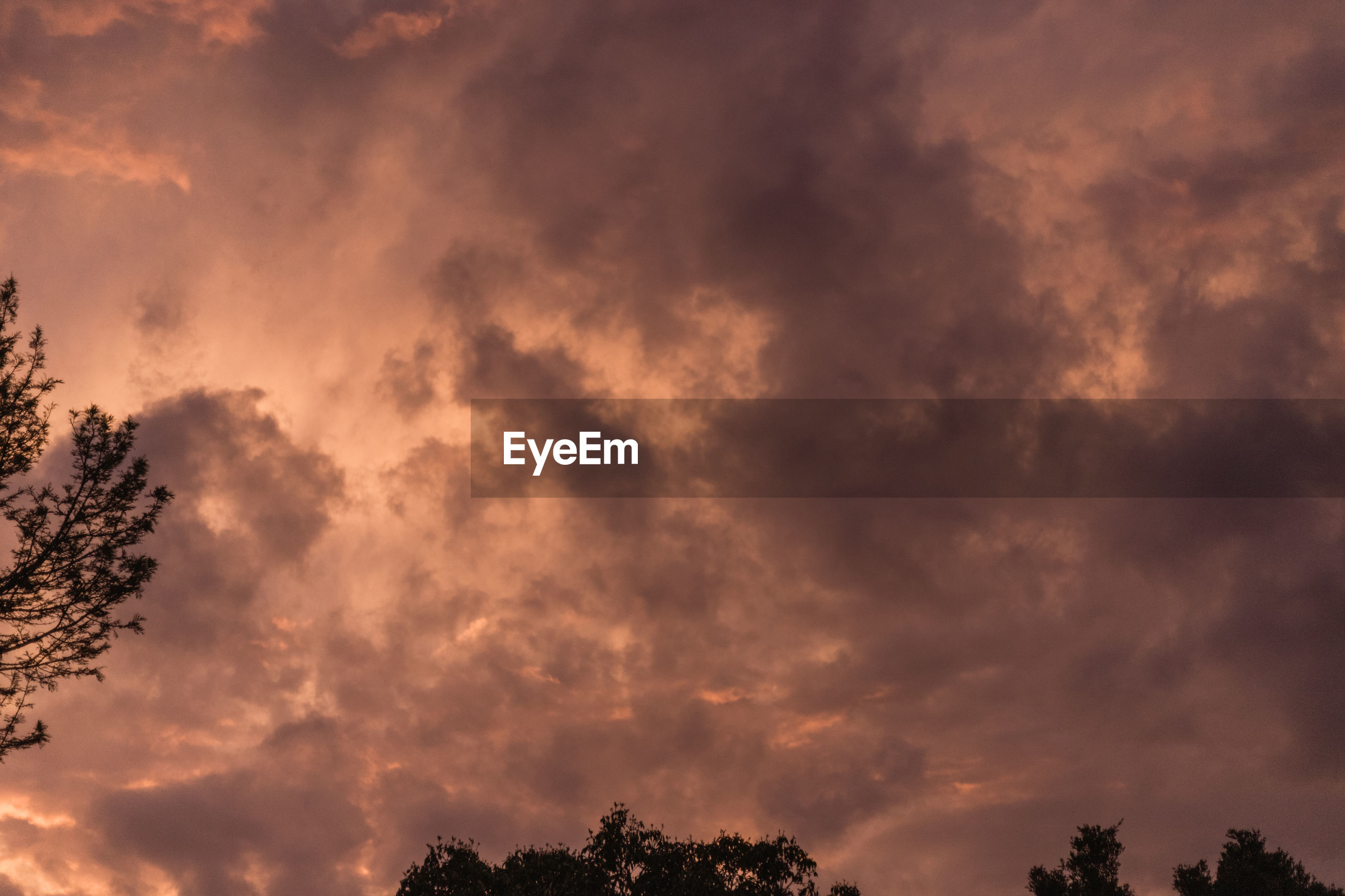 LOW ANGLE VIEW OF TREE AGAINST DRAMATIC SKY DURING SUNSET