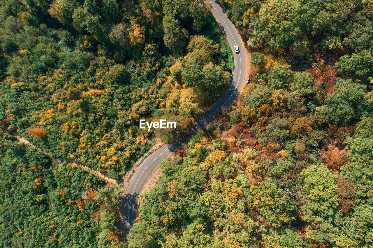 Directly Above Shot Of Winding Road Amidst Trees During Autumn