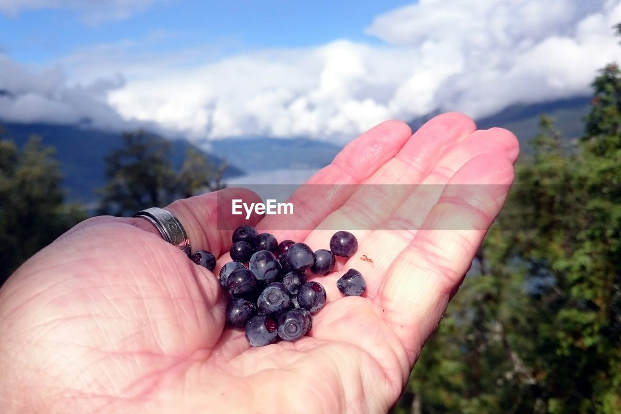 human hand, fruit, food and drink, healthy eating, food, hand, human body part, berry fruit, holding, wellbeing, one person, real people, focus on foreground, freshness, day, unrecognizable person, nature, close-up, lifestyles, personal perspective, finger, body part, outdoors, ripe