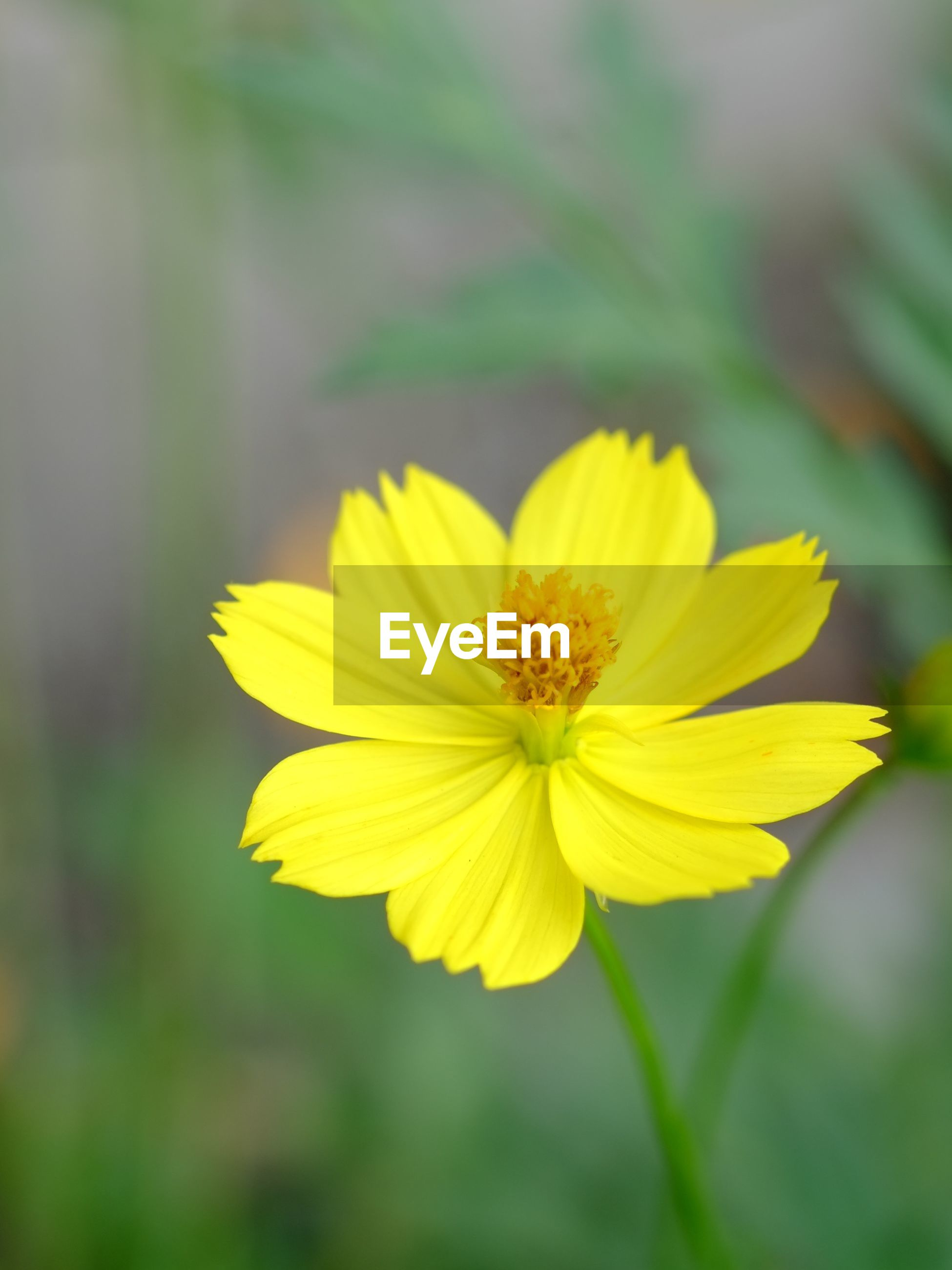 flower, petal, yellow, flower head, freshness, fragility, focus on foreground, close-up, beauty in nature, growth, single flower, pollen, blooming, nature, plant, in bloom, park - man made space, selective focus, day, outdoors