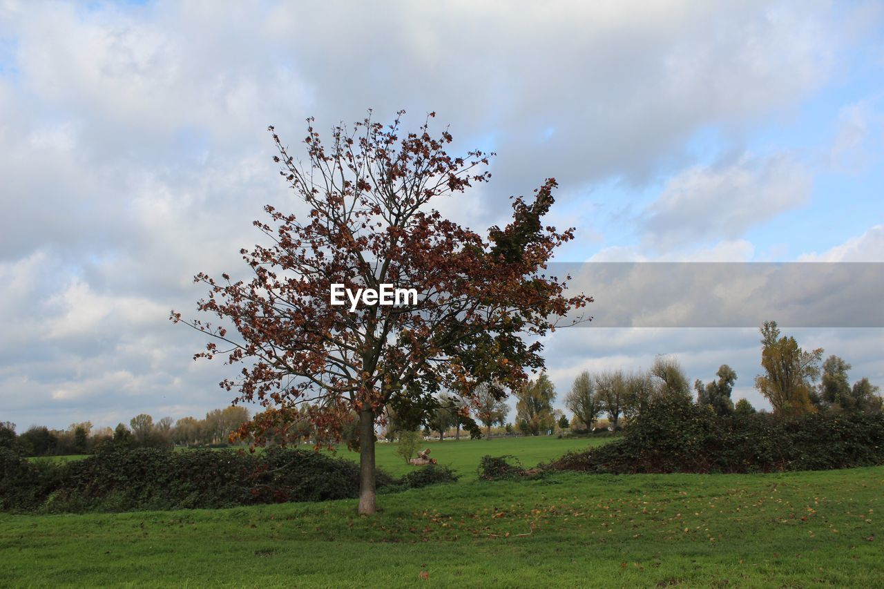 tree, grass, sky, cloud - sky, nature, landscape, beauty in nature, field, growth, tranquility, day, no people, outdoors, tranquil scene, scenics