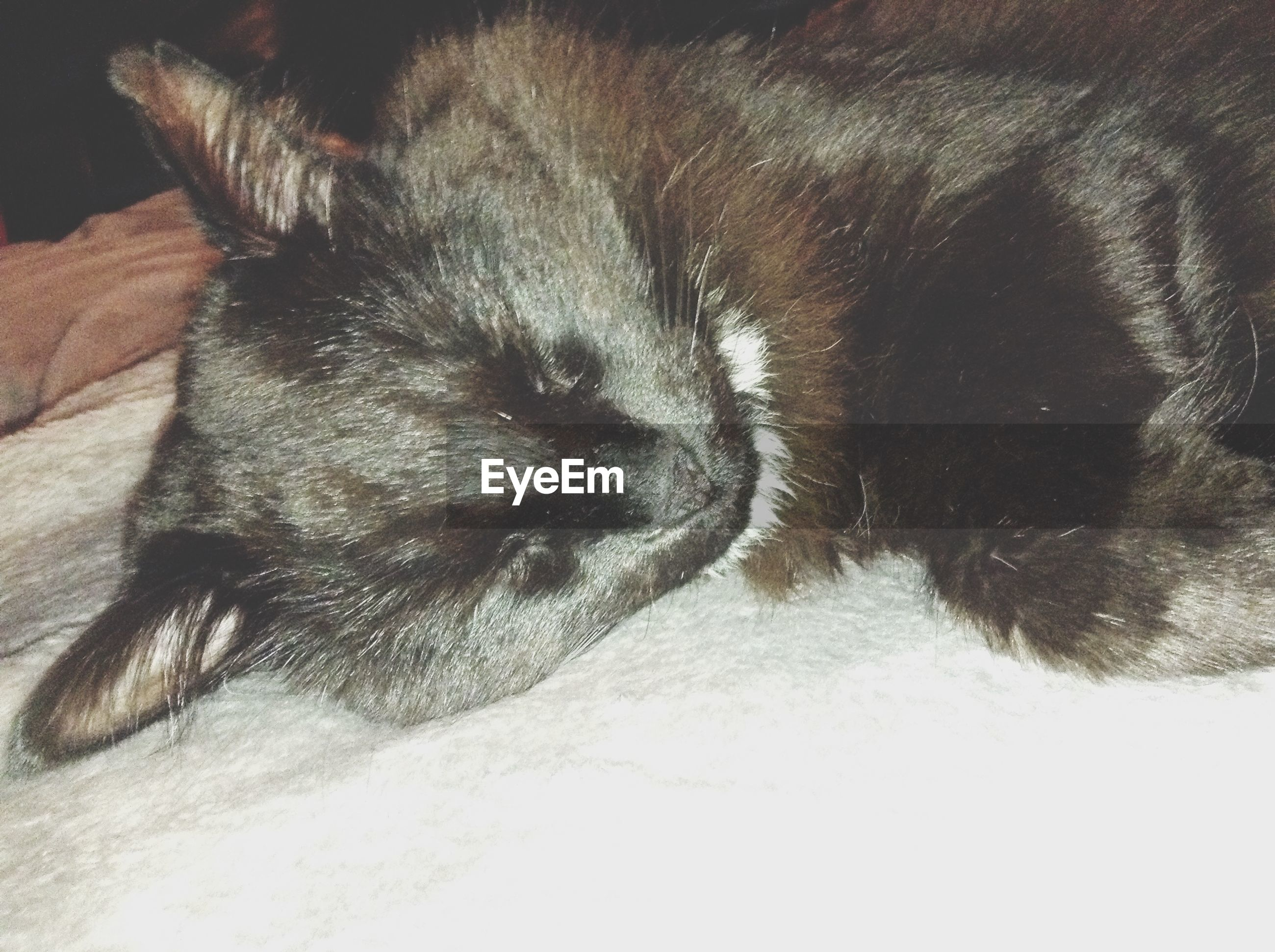 domestic animals, animal themes, pets, one animal, mammal, dog, sleeping, indoors, relaxation, animal head, animal body part, resting, close-up, domestic cat, lying down, eyes closed, cat, feline, animal hair, no people