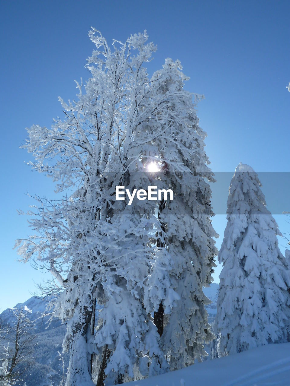 LOW ANGLE VIEW OF SNOW COVERED TREE AGAINST BLUE SKY