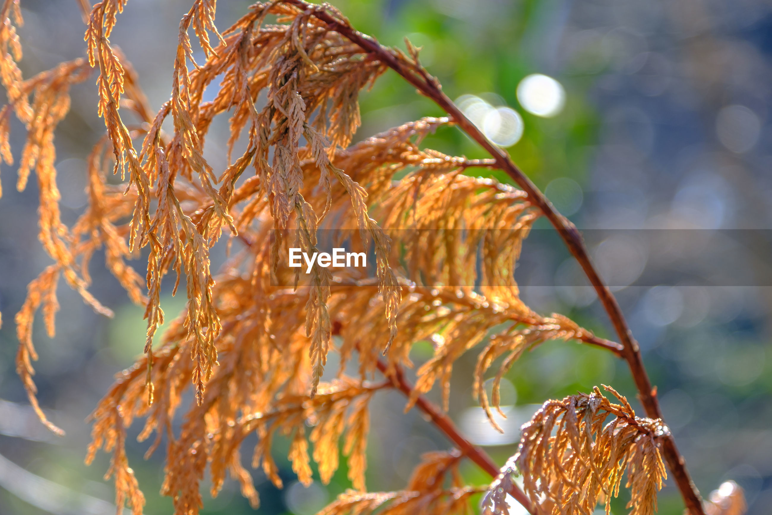 Close-up of dry leaves on tree