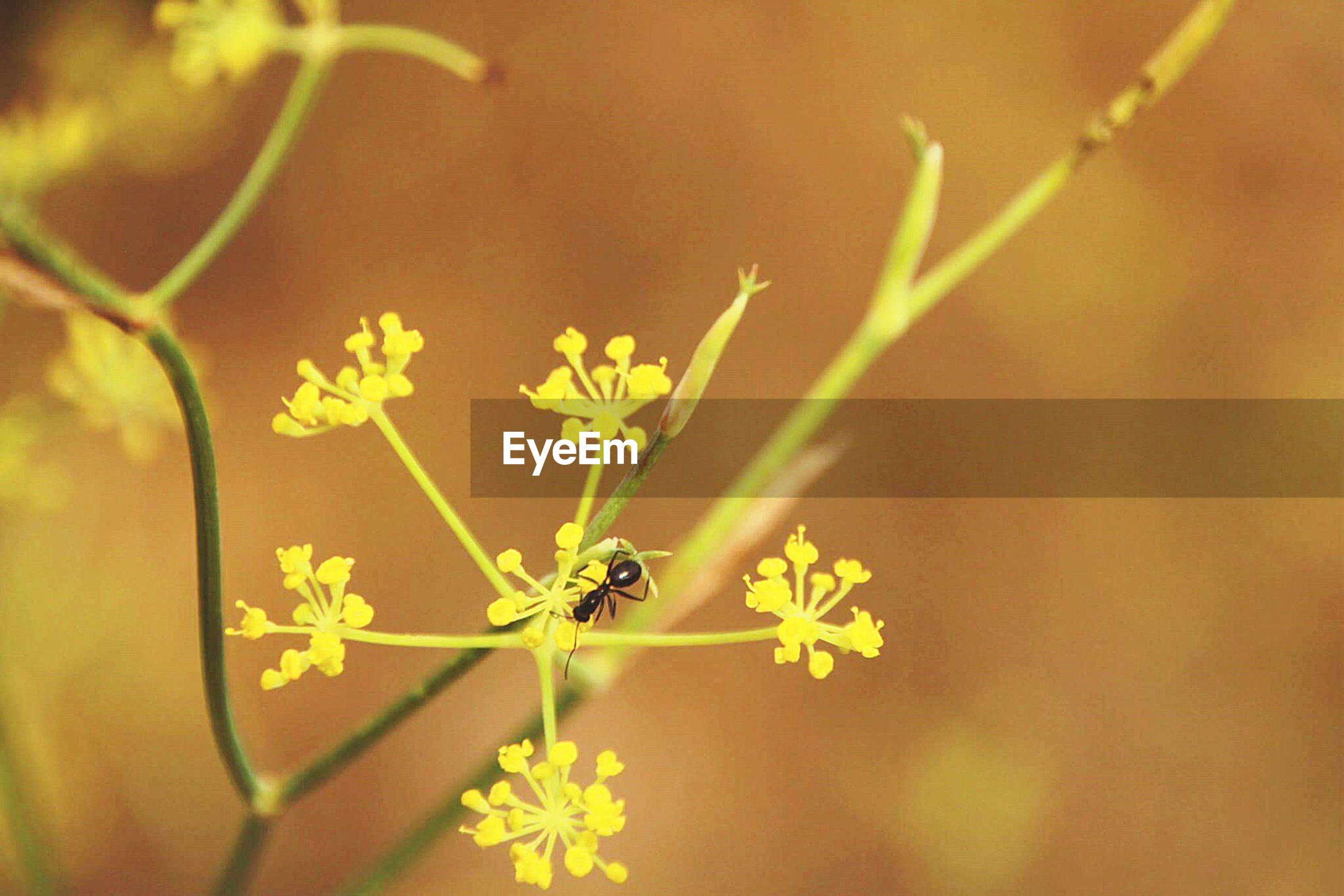 flower, insect, animal themes, one animal, animals in the wild, wildlife, fragility, plant, focus on foreground, growth, close-up, freshness, beauty in nature, petal, nature, yellow, selective focus, stem, outdoors, no people