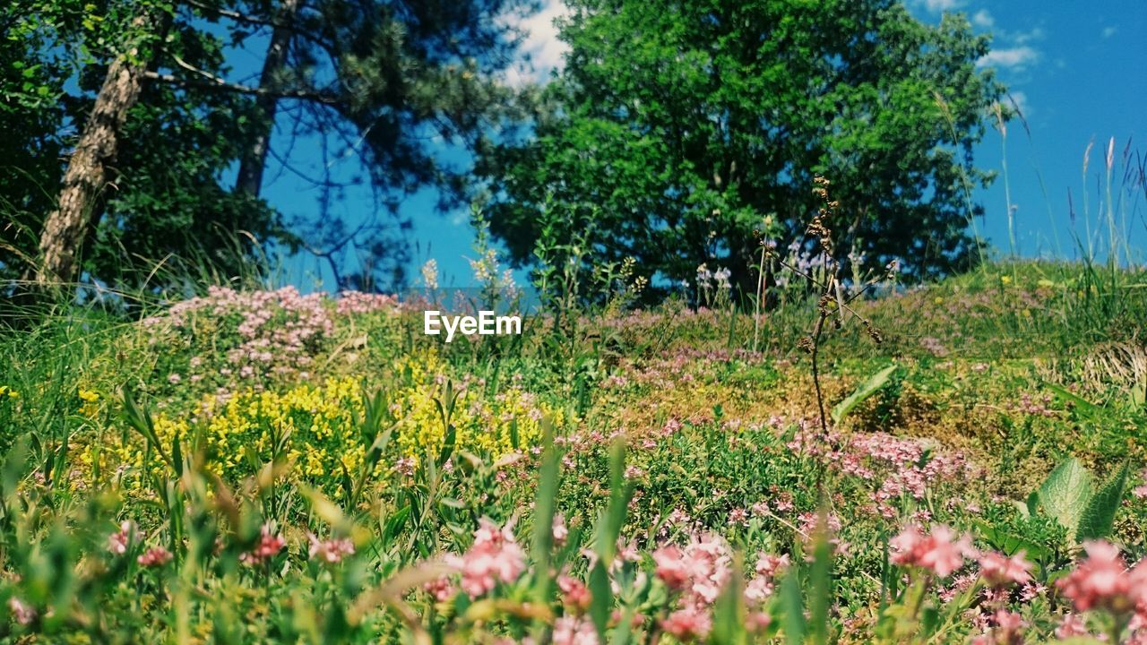 growth, nature, plant, flora, grass, tree, field, flower, no people, summer, tranquility, outdoors, day, beauty in nature, sky, freshness