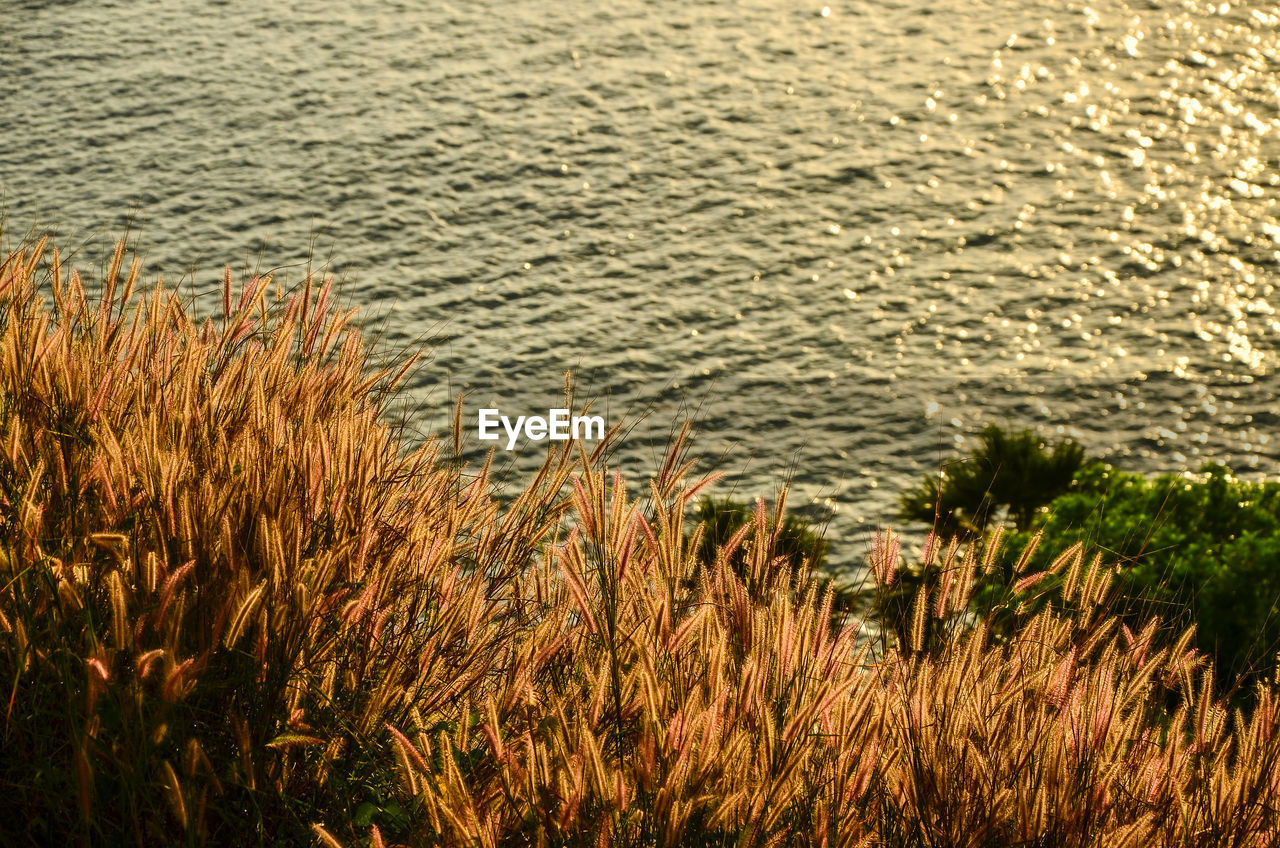 nature, no people, outdoors, water, day, grass, growth, plant, beauty in nature, close-up