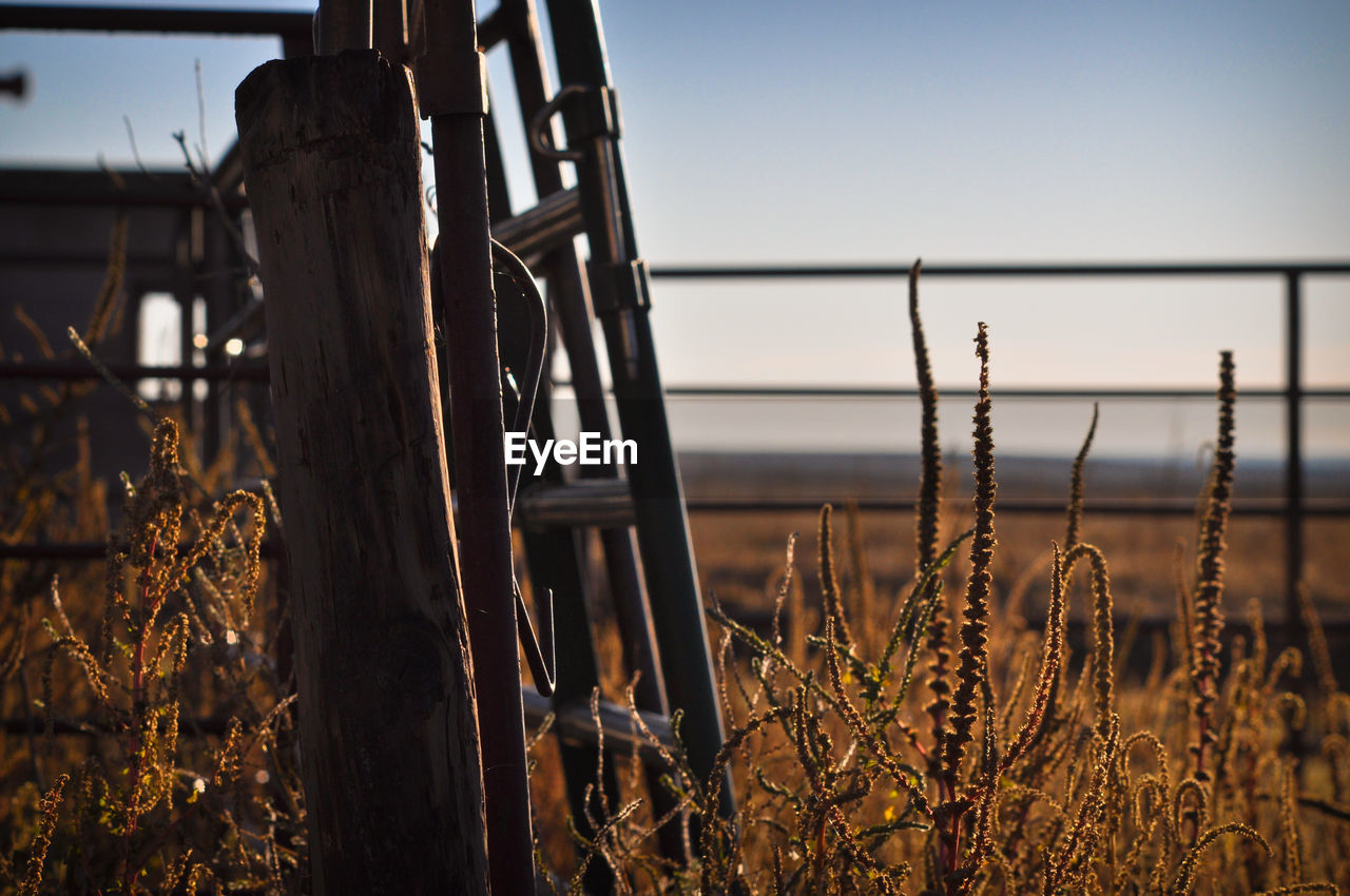 focus on foreground, sky, nature, plant, no people, field, land, close-up, tranquility, day, barrier, outdoors, fence, metal, boundary, beauty in nature, selective focus, wood - material, clear sky, security, wooden post