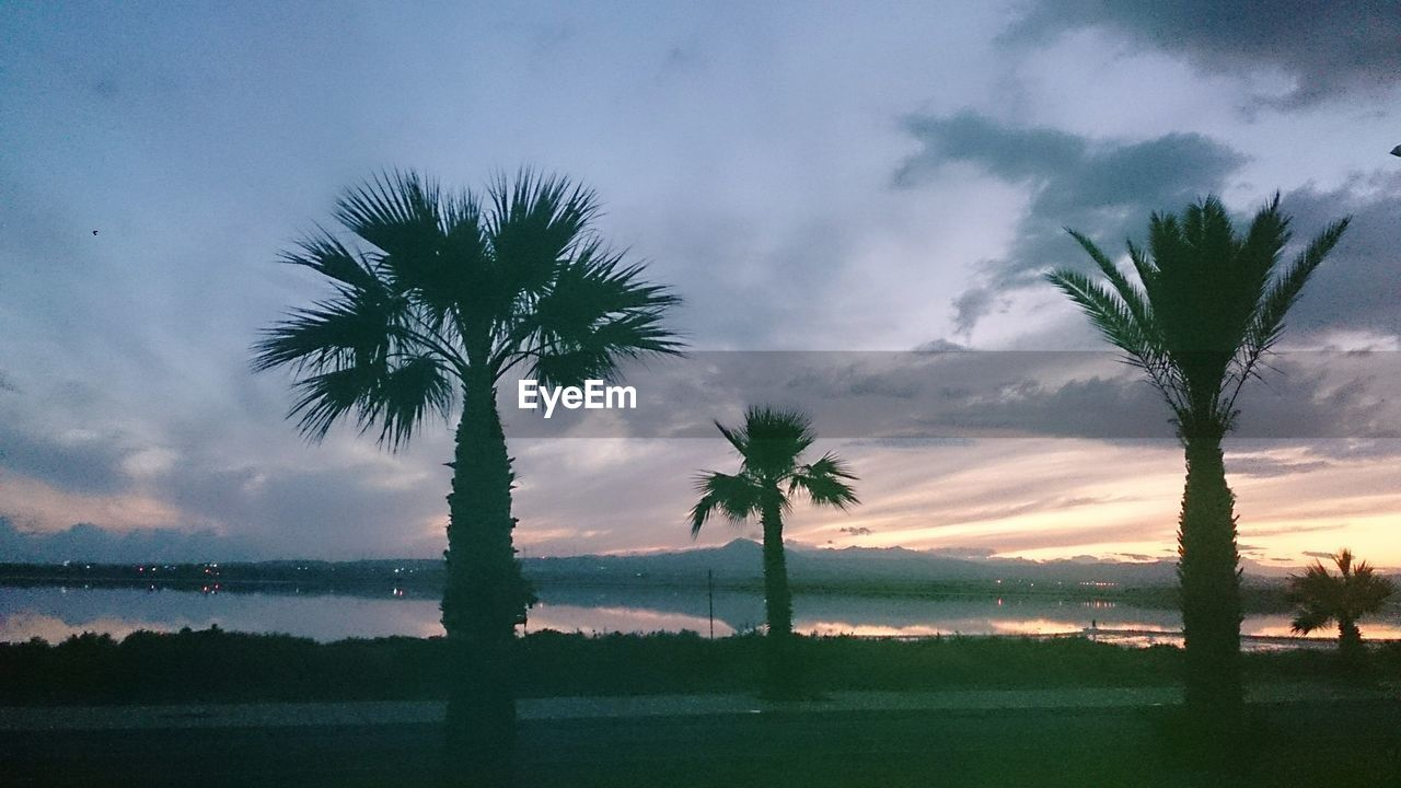 tree, palm tree, beauty in nature, tranquility, tree trunk, scenics, nature, sky, silhouette, tranquil scene, idyllic, cloud - sky, no people, sunset, outdoors, growth, landscape, water, sea, day