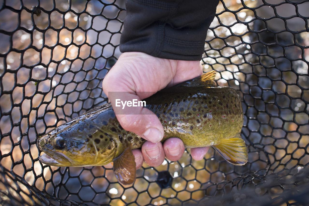 CLOSE-UP OF HAND HOLDING FISH AT SHORE