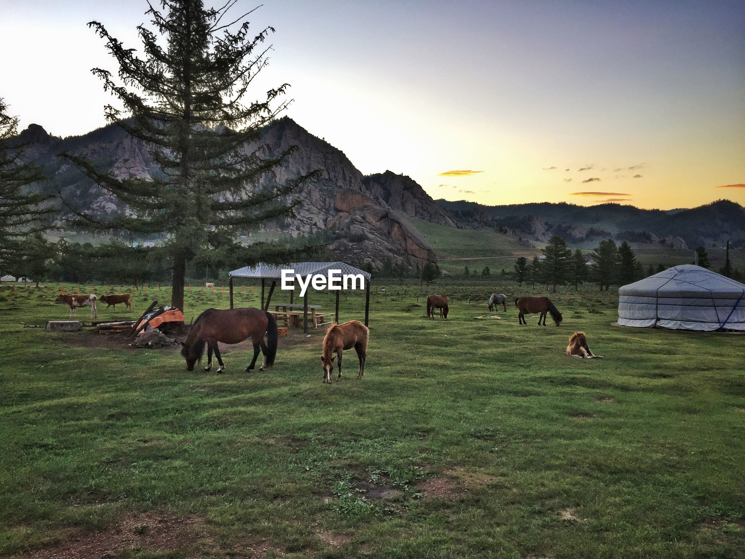 animal themes, livestock, domestic animals, mountain, landscape, grass, mammal, field, horse, cow, grazing, domestic cattle, sky, mountain range, nature, medium group of animals, tree, tranquility, tranquil scene