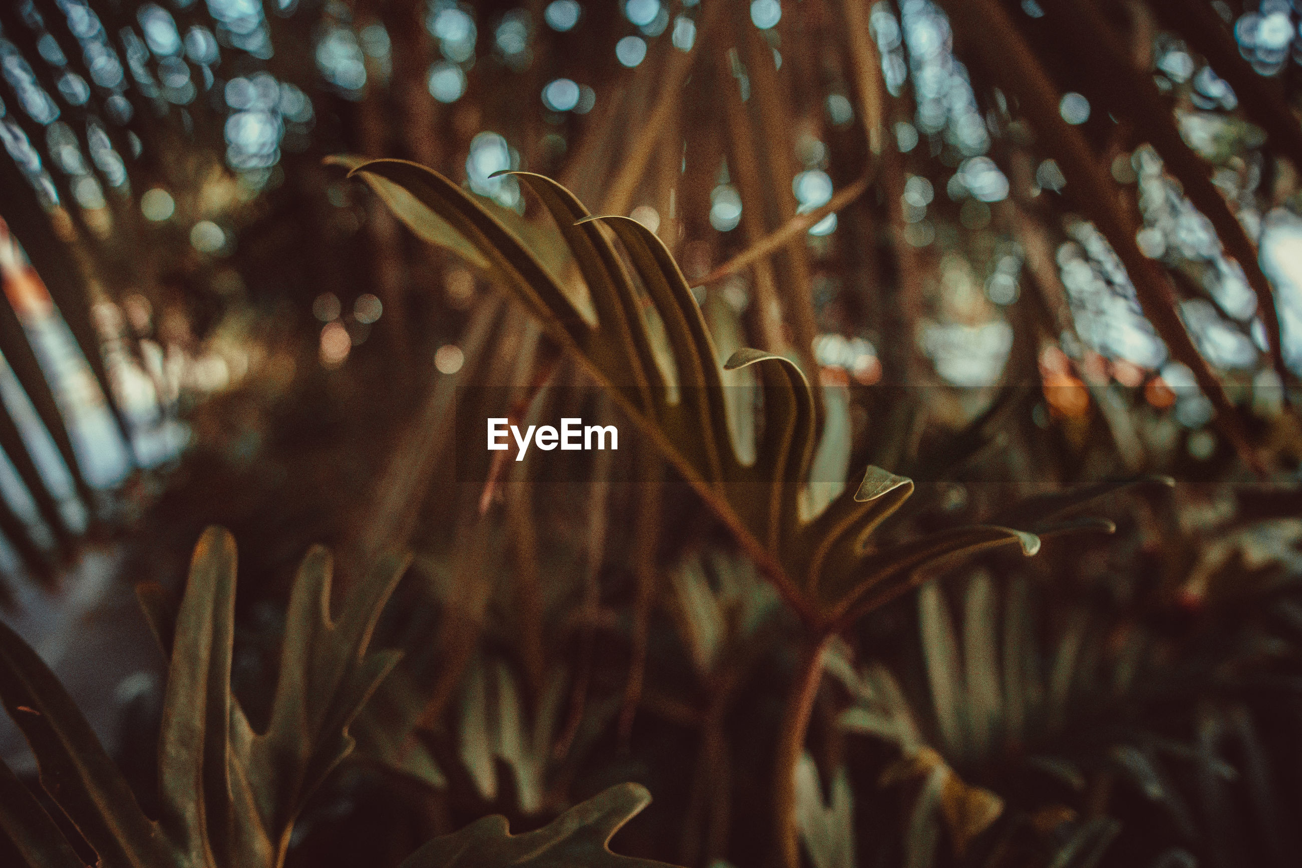 growth, plant, focus on foreground, close-up, beauty in nature, no people, nature, day, selective focus, tranquility, freshness, outdoors, leaf, tree, plant part, vulnerability, flowering plant, fragility, flower, land, blade of grass, dew