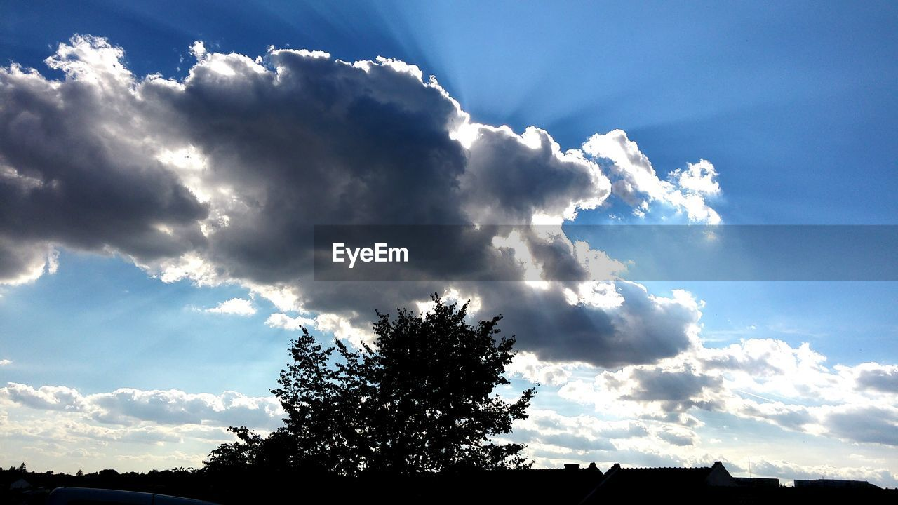 sky, nature, beauty in nature, tree, tranquility, low angle view, cloud - sky, scenics, no people, outdoors, day