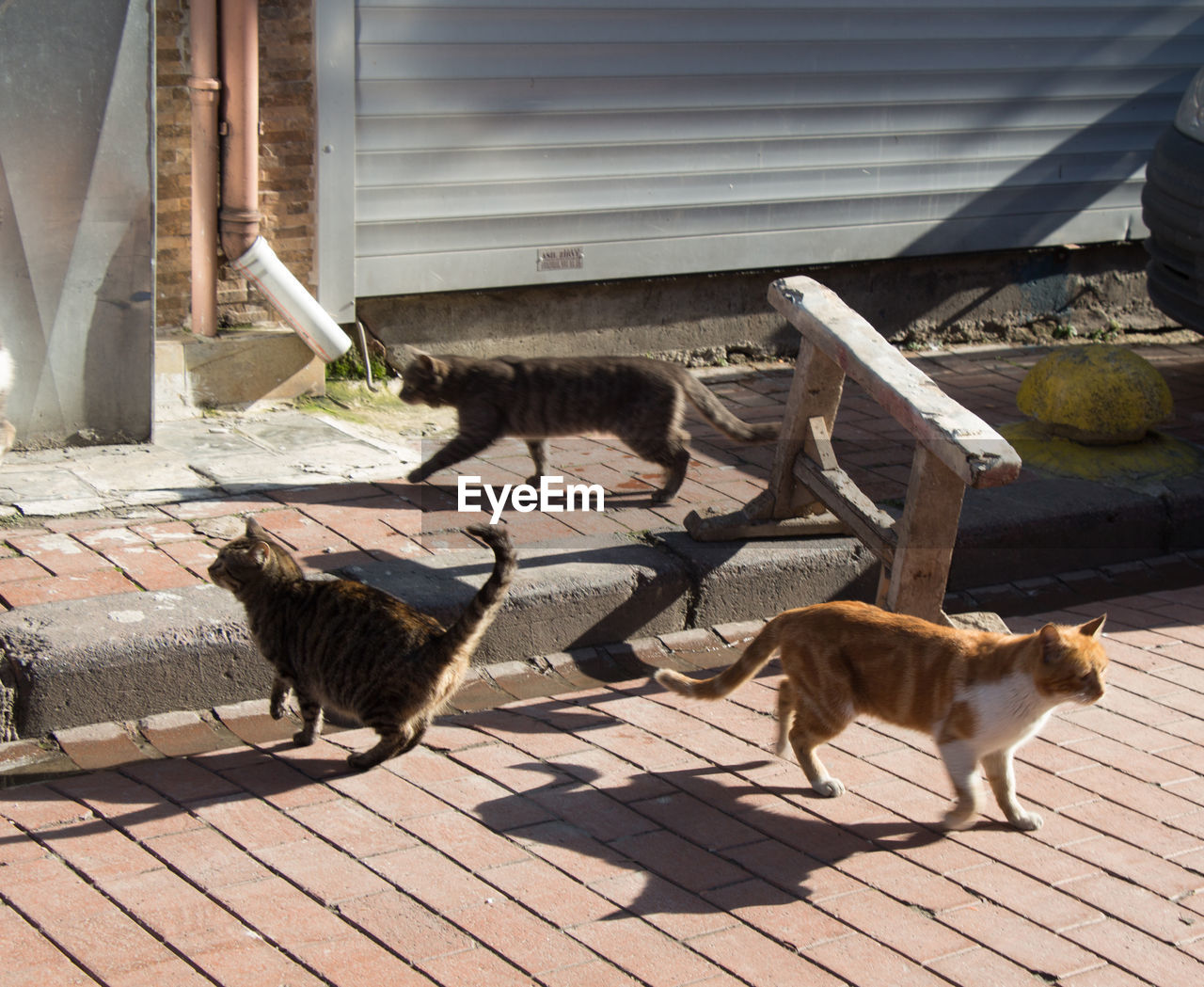 group of animals, animal, mammal, animal themes, domestic animals, vertebrate, sunlight, domestic, no people, pets, day, shadow, architecture, nature, built structure, footpath, feline, outdoors, cat, full length, animal family