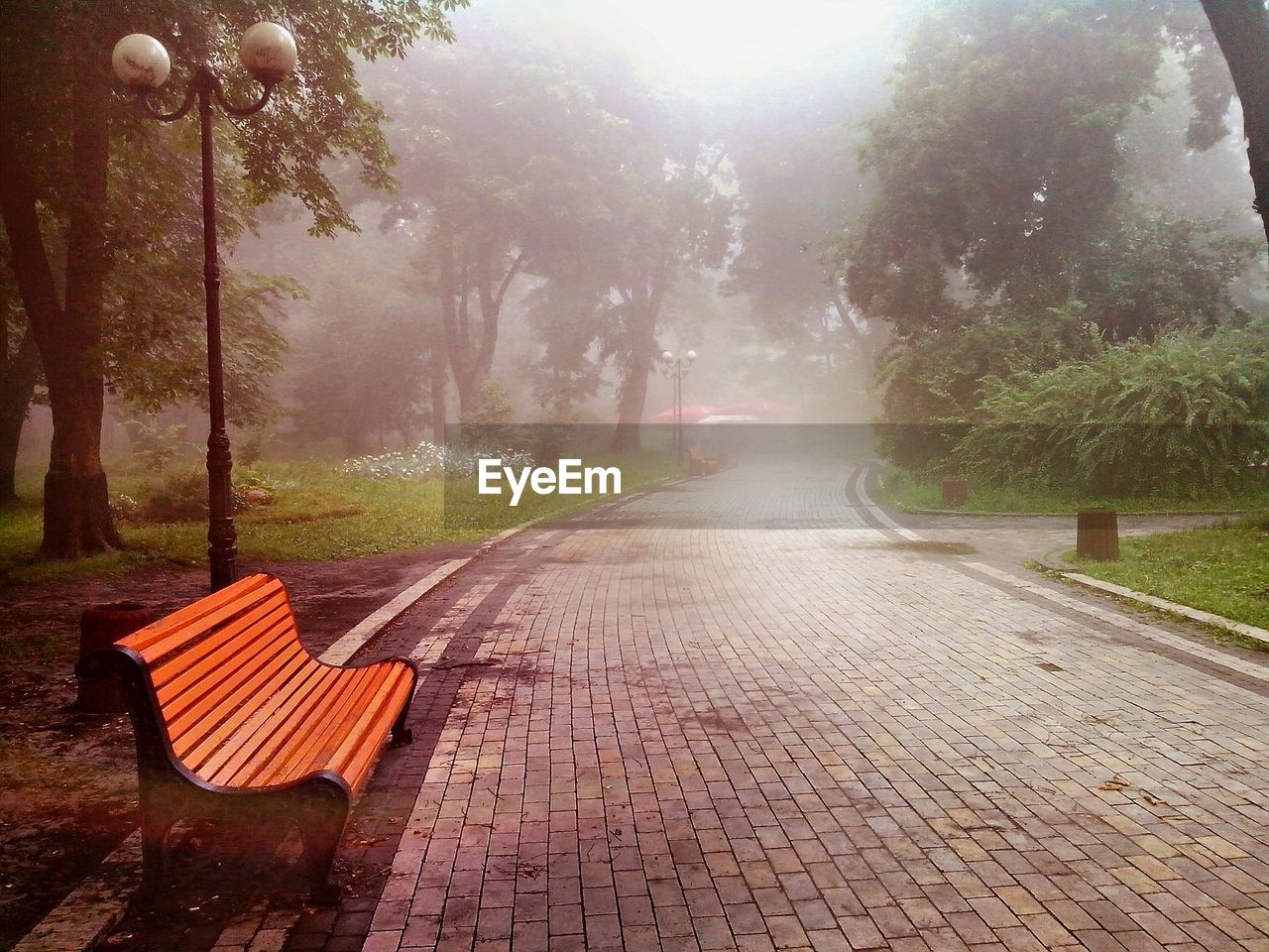 tree, empty, nature, absence, day, tranquility, outdoors, beauty in nature, growth, fog, no people