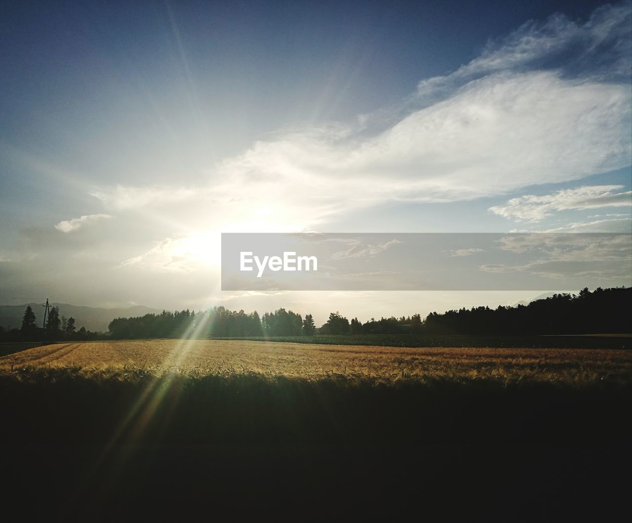 sky, landscape, tranquil scene, field, environment, tranquility, scenics - nature, beauty in nature, land, cloud - sky, sunlight, nature, plant, no people, rural scene, agriculture, tree, sunset, growth, sun, outdoors, lens flare, bright, brightly lit, plantation