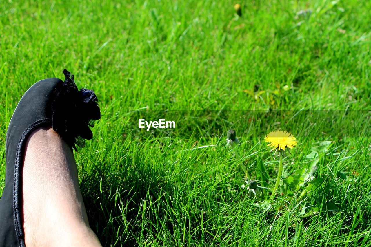 grass, one animal, field, flower, real people, animal themes, nature, one person, growth, green color, human body part, human hand, outdoors, pets, dog, day, domestic animals, mammal, lifestyles, beauty in nature, people