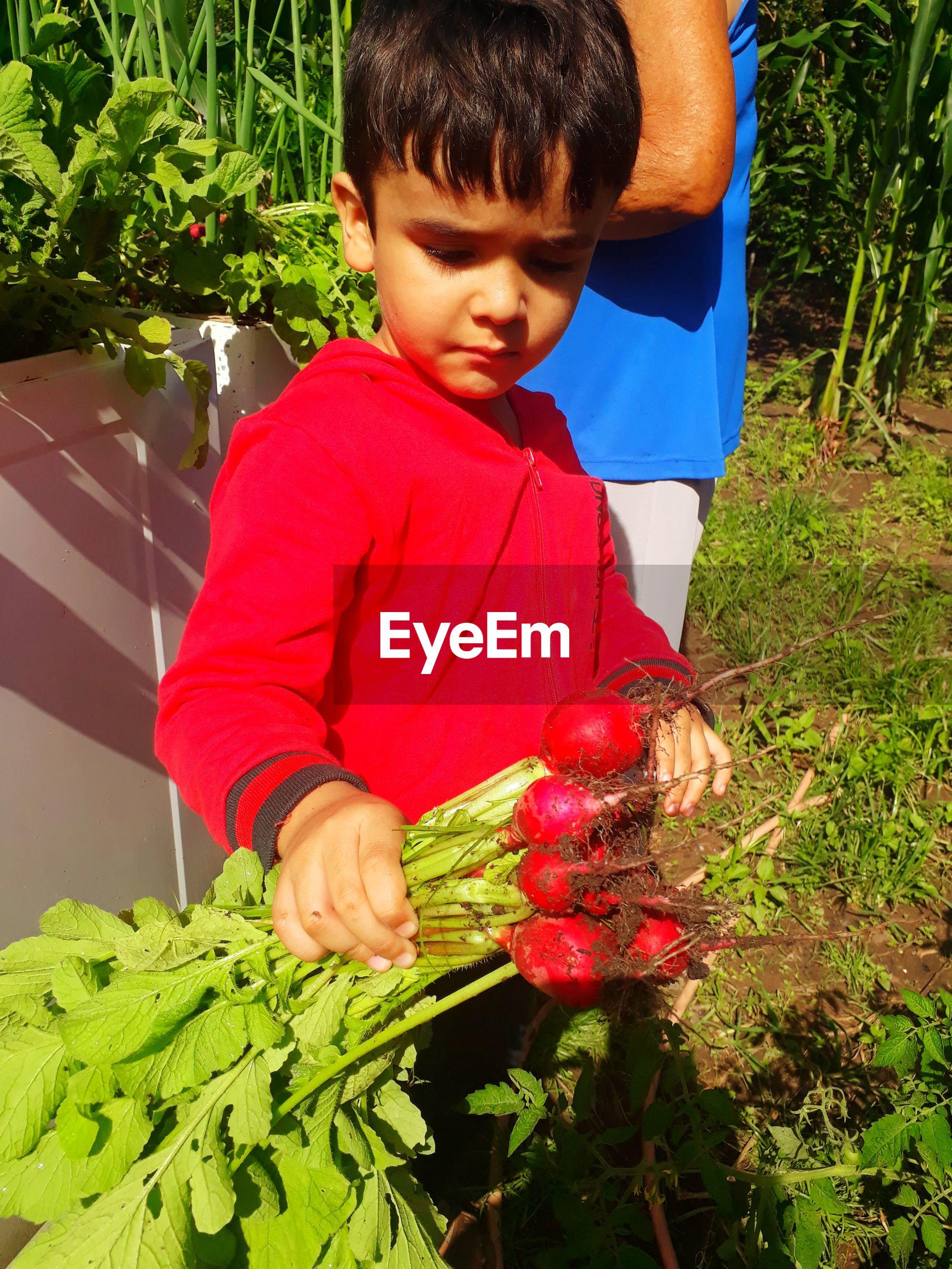 Boy holding radishes at yard