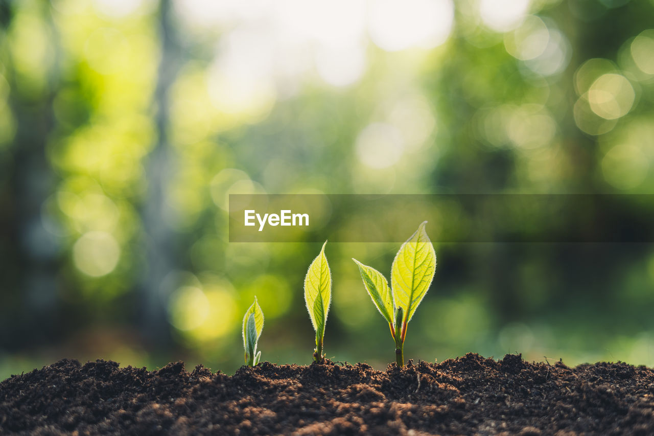 growth, plant, green color, beginnings, nature, new life, beauty in nature, close-up, seedling, focus on foreground, day, selective focus, fragility, plant part, no people, vulnerability, freshness, leaf, sapling, field, outdoors, small, gardening, plantation
