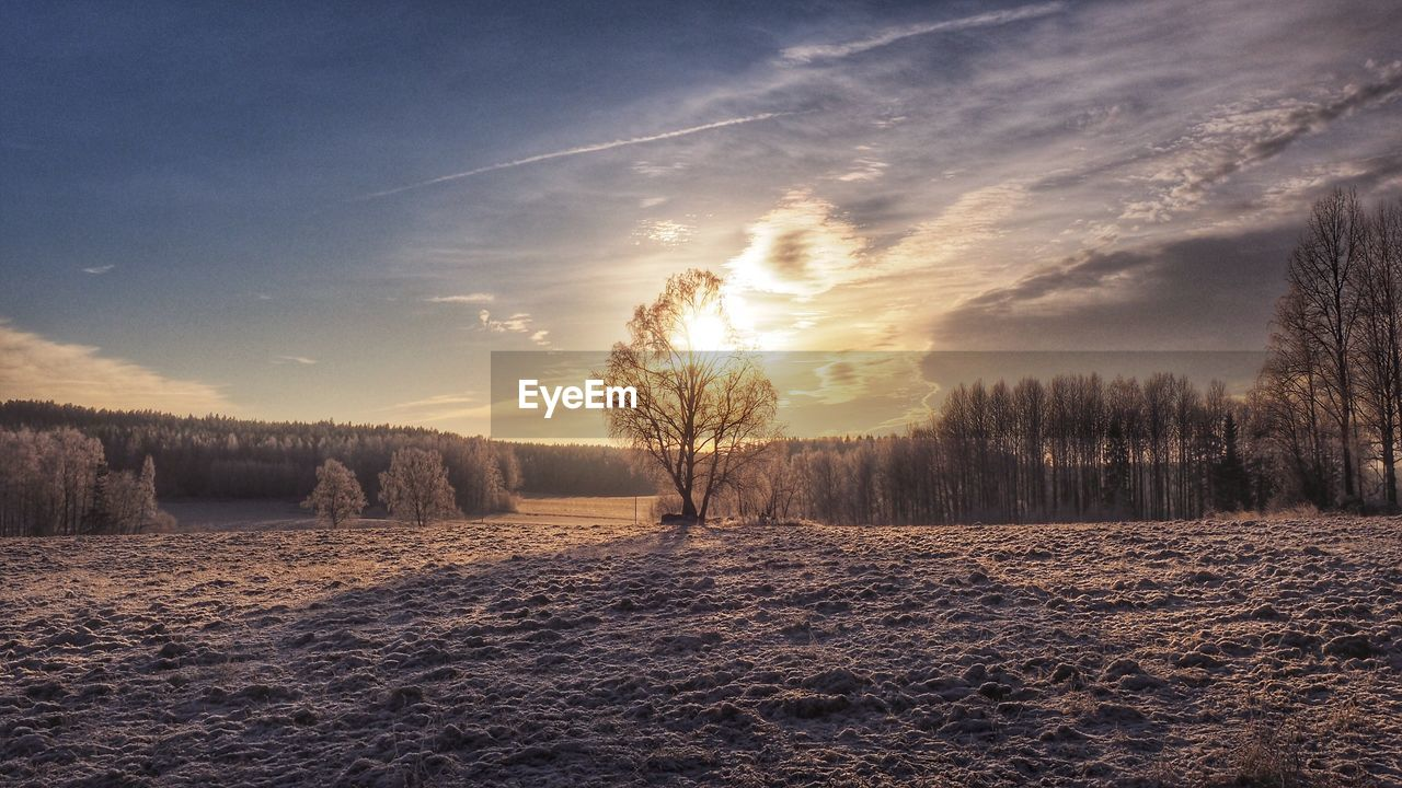 Trees on snowy landscape against sky during winter