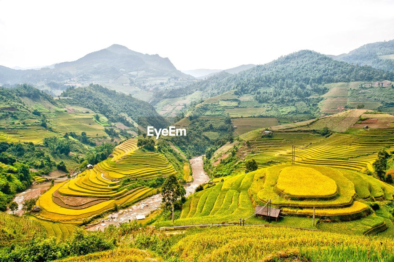 mountain, landscape, scenics - nature, environment, rice - cereal plant, plant, beauty in nature, rural scene, rice paddy, field, agriculture, terraced field, tranquil scene, terrace, rice, mountain range, land, nature, growth, farm, no people, outdoors