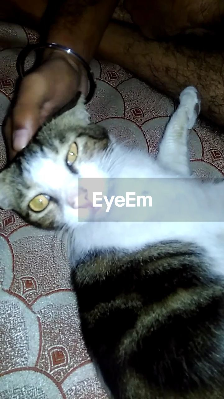 pets, domestic animals, mammal, domestic cat, one animal, animal themes, indoors, high angle view, feline, cat, real people, one person, human body part, dog, human hand, close-up, day, people