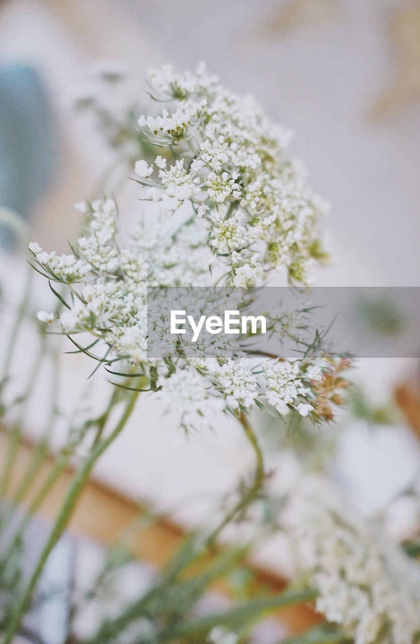 white color, flower, fragility, nature, close-up, selective focus, growth, no people, beauty in nature, tree, day, outdoors, freshness