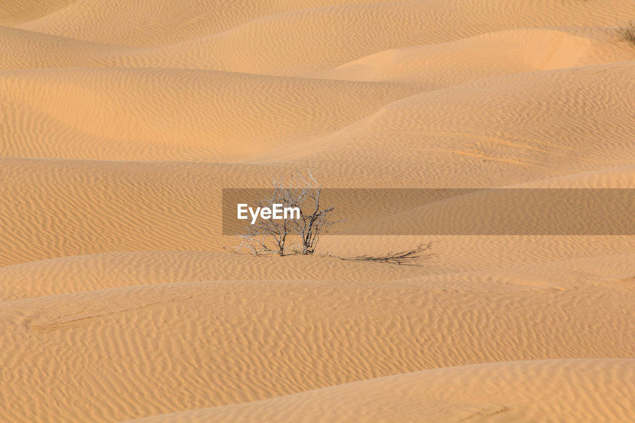 sand, sand dune, desert, arid climate, nature, extreme terrain, loneliness, day, backgrounds, full frame, landscape, pattern, outdoors, scenics, beauty in nature, no people, sky
