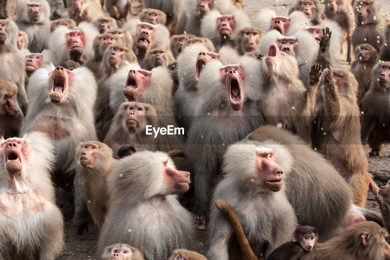 Herd Of Monkeys