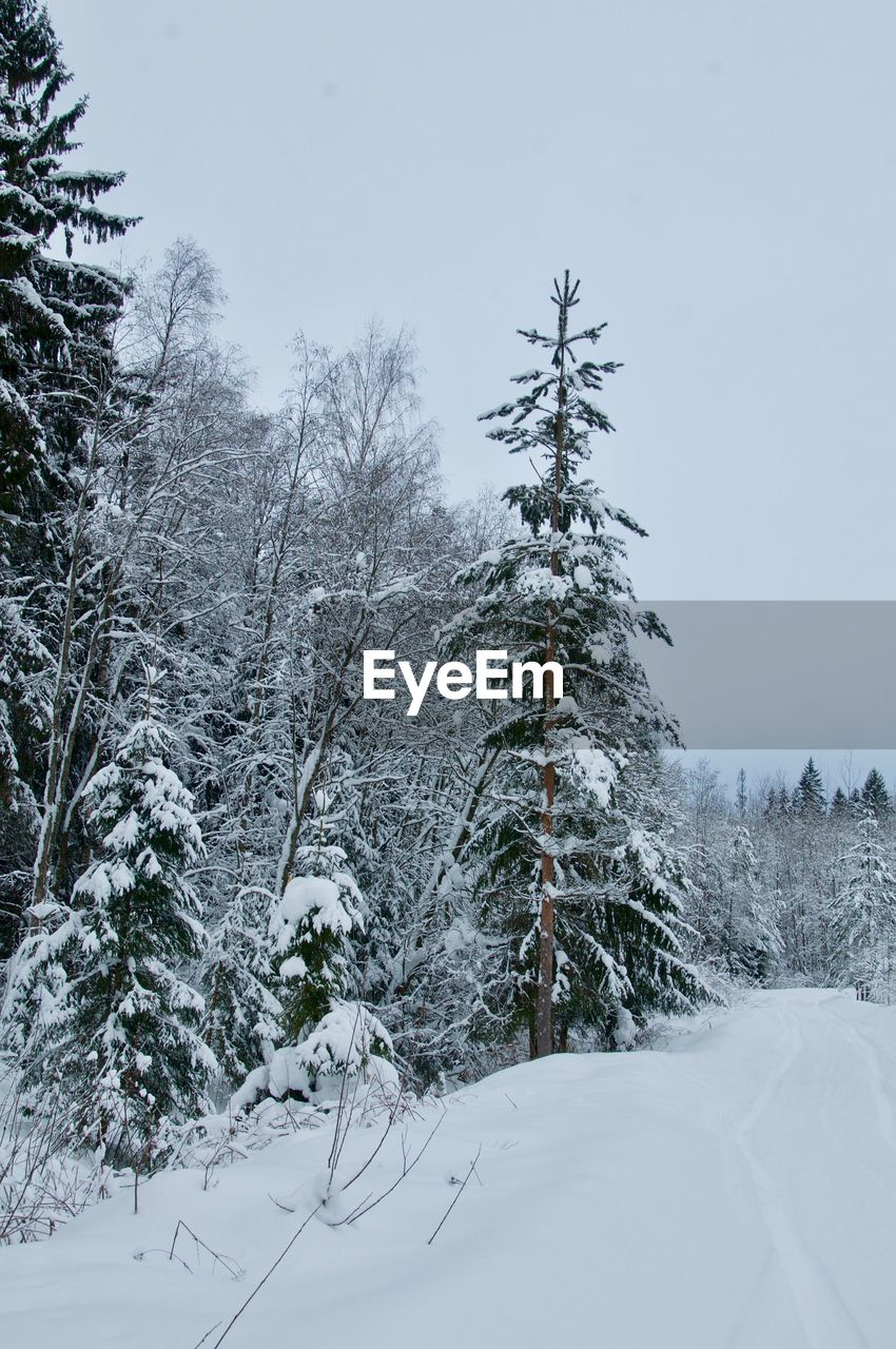 snow, cold temperature, winter, tree, plant, beauty in nature, covering, land, nature, tranquility, white color, scenics - nature, no people, tranquil scene, sky, day, forest, frozen, growth, outdoors, snowcapped mountain, coniferous tree, snowing
