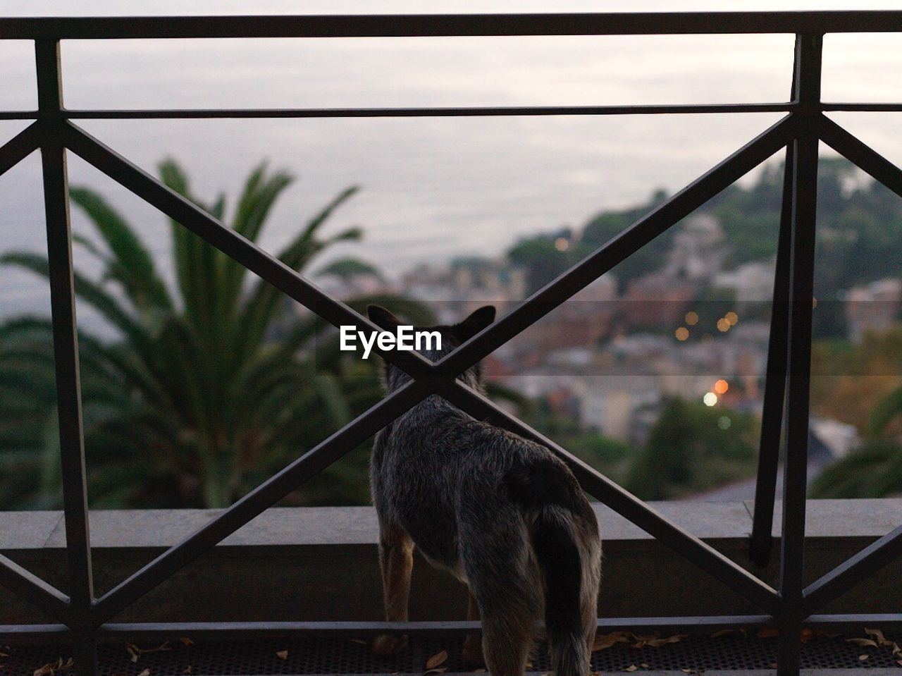 Rear View Of Dog Standing By Railing