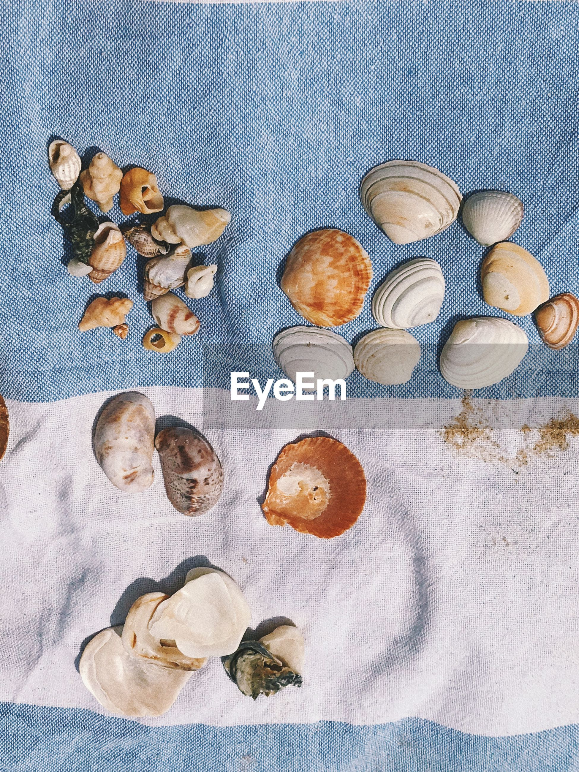 Directly above shot of shells on textile for sale