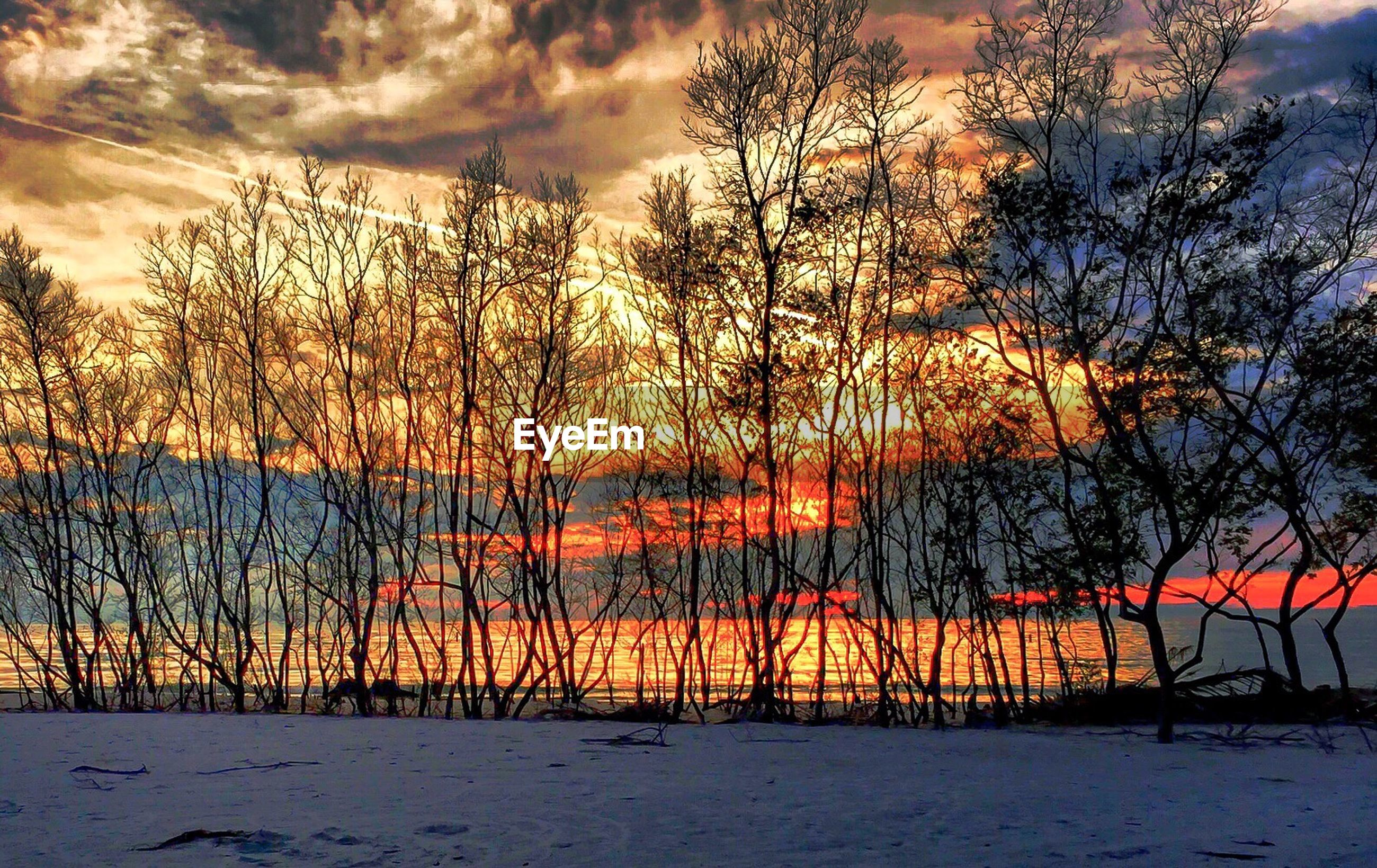 SCENIC VIEW OF TREES AGAINST SKY DURING SUNSET