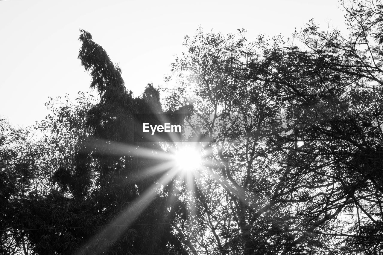 sunbeam, tree, sunlight, low angle view, lens flare, sun, nature, no people, outdoors, growth, day, tranquility, beauty in nature, sky, clear sky, branch