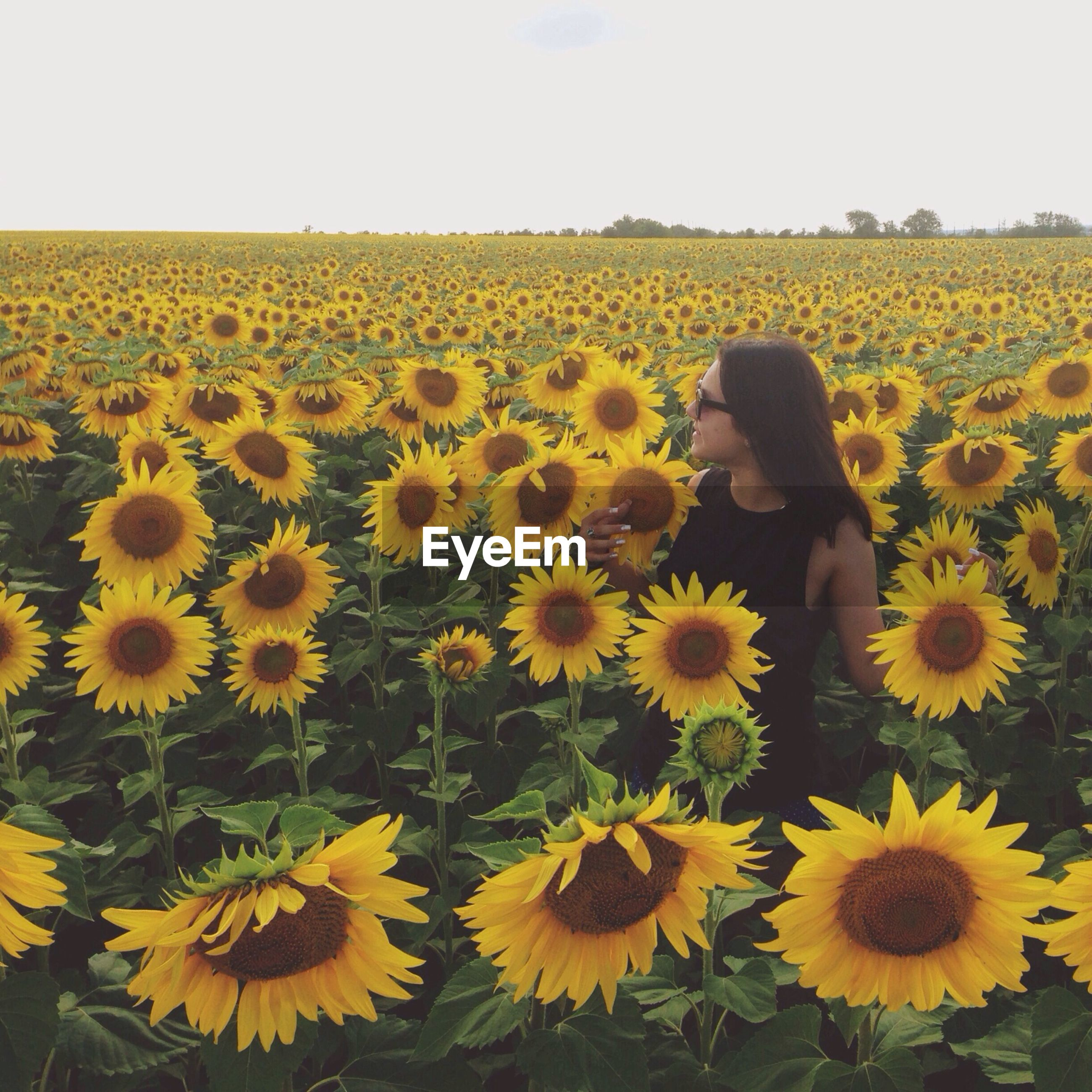 Mid adult woman standing amidst sunflower field