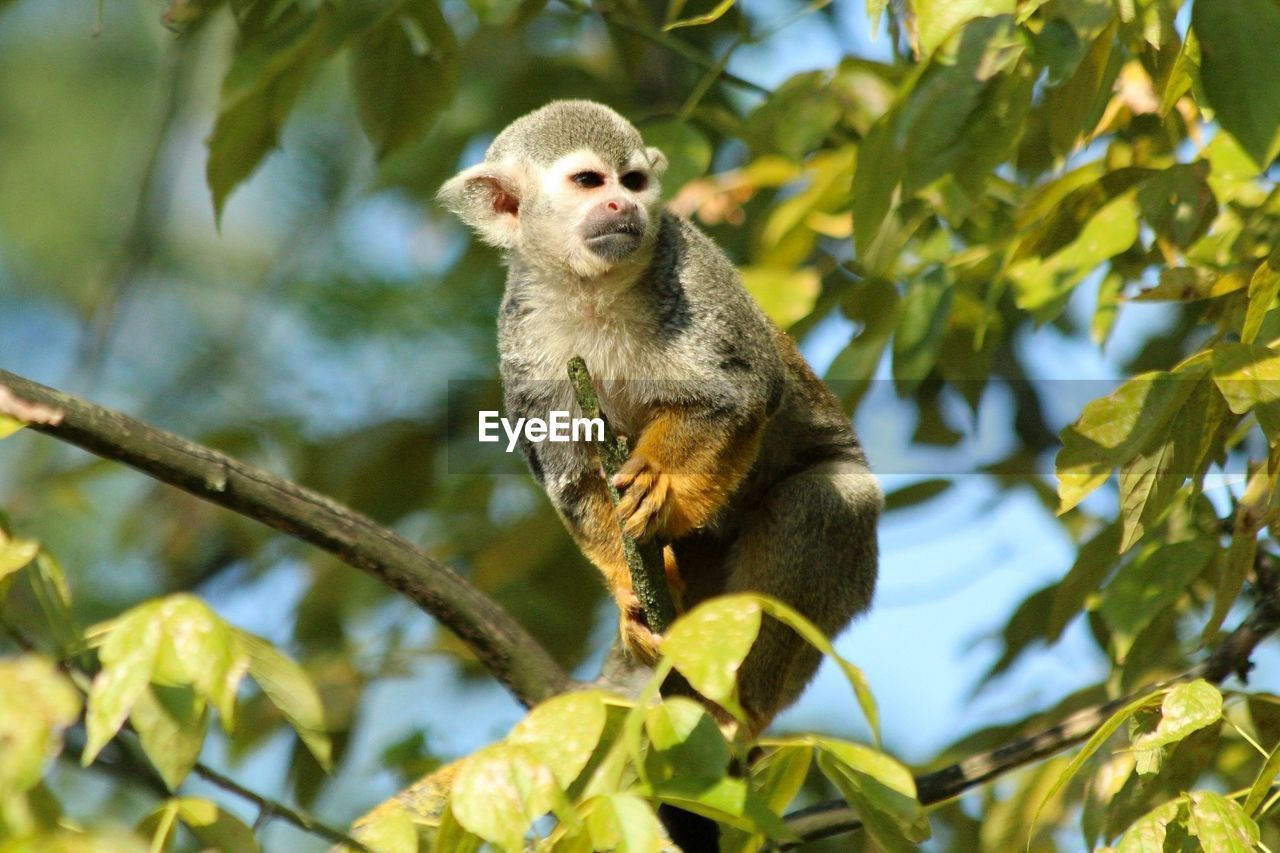 Close-up of monkey on tree branch