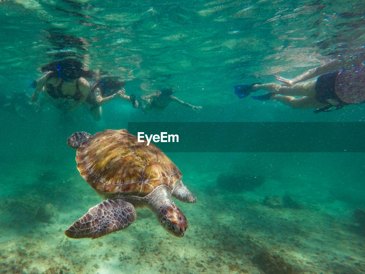 sea, underwater, swimming, water, animal wildlife, turtle, undersea, sea life, animal themes, animals in the wild, nature, animal, marine, reptile, sea turtle, vertebrate, group of animals, day, outdoors, turquoise colored