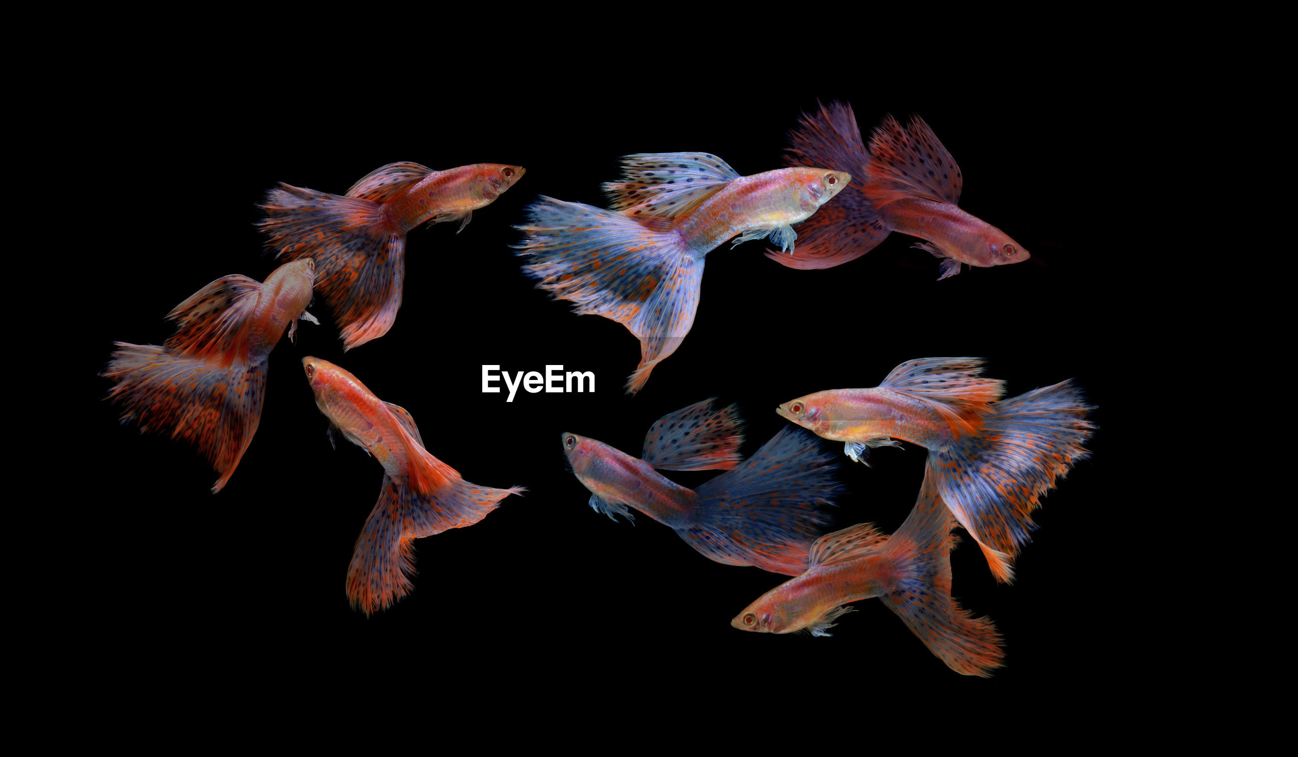 Group of fish over black background