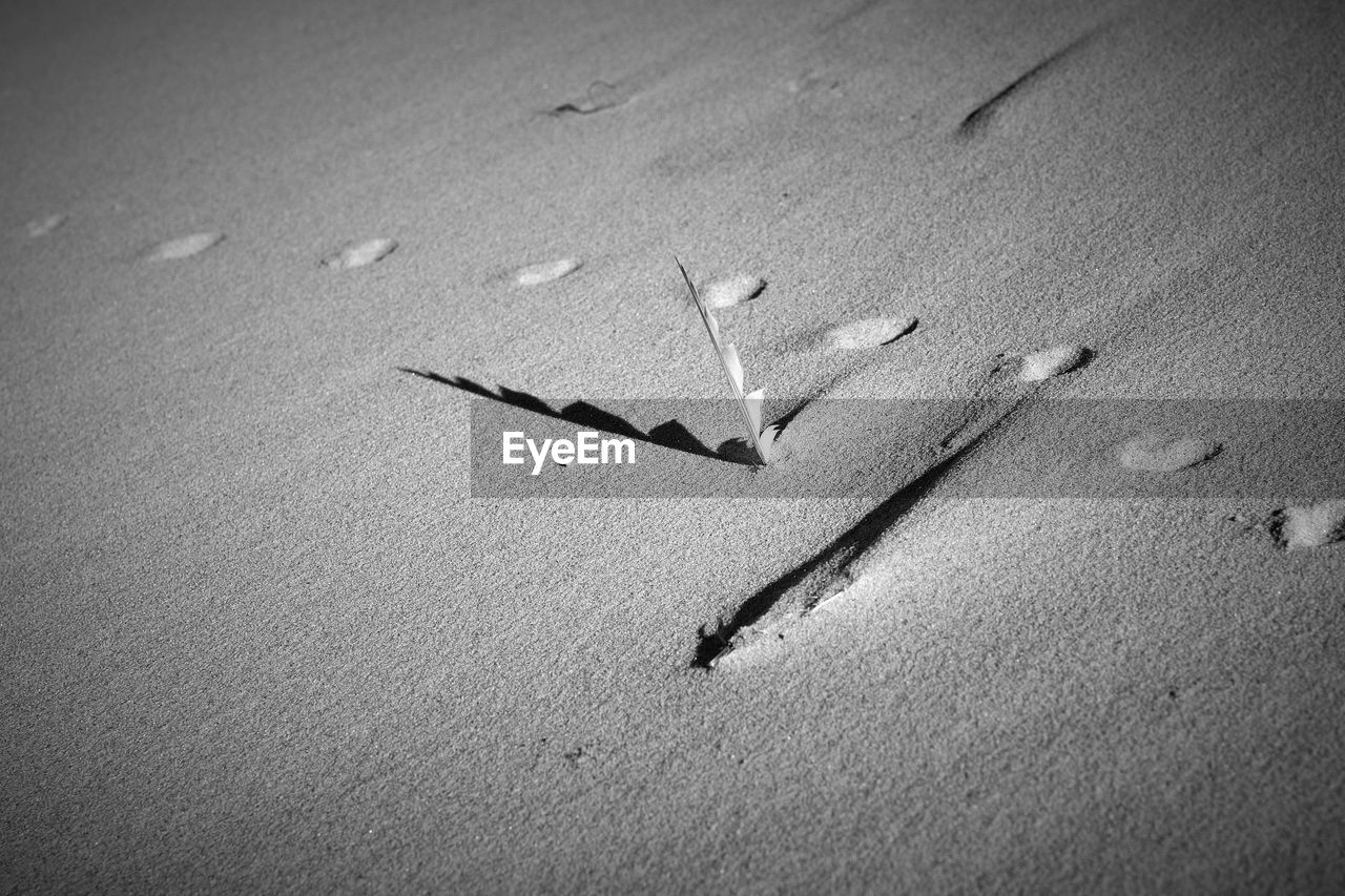 sand, beach, high angle view, footprint, no people, shadow, outdoors, day, sunlight, nature, animal themes, animals in the wild, bird, close-up