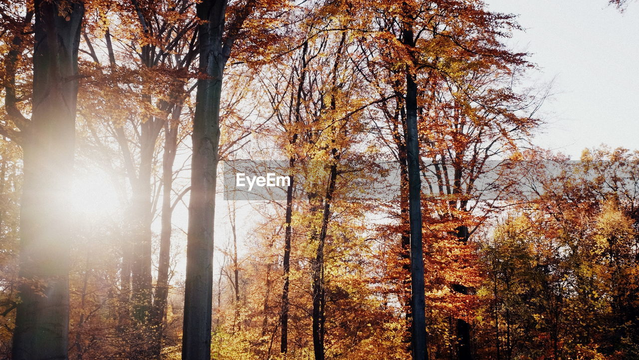 TREES IN FOREST DURING AUTUMN AGAINST SKY